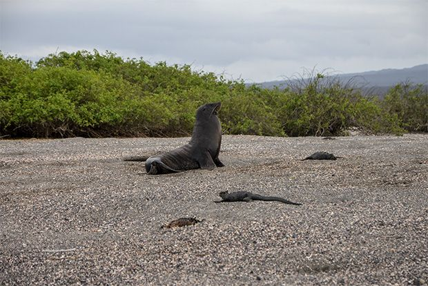 Honeymoon to the Galapagos Islands February 2018