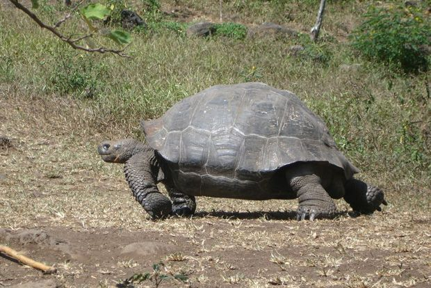 Tour Packages to the Galapagos Islands February 2018