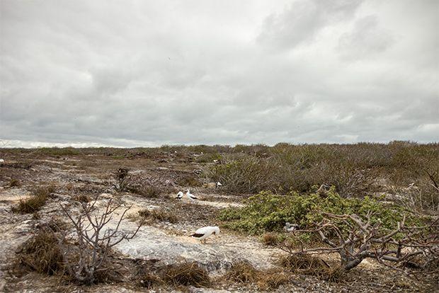 Birthday to the Galapagos Islands May 2018