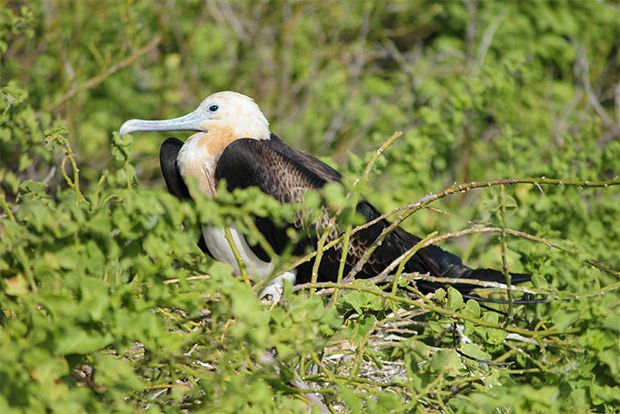 Cruises to the Galapagos Islands June 2018