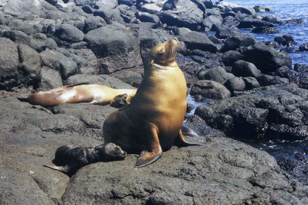 Cruises to the Galapagos Islands for 1 person May 2018