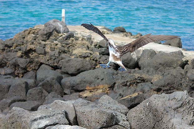 Cruises to the Galapagos Islands for 12 people June 2018