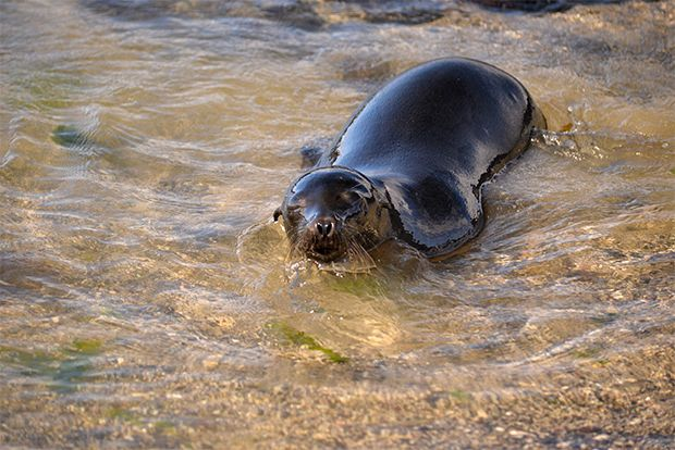 Cruises to the Galapagos Islands for 13 people March 2018