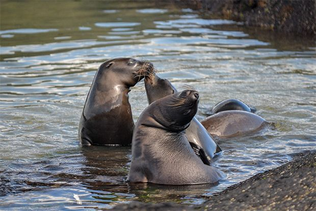 Cruises to the Galapagos Islands for 13 people May 2018
