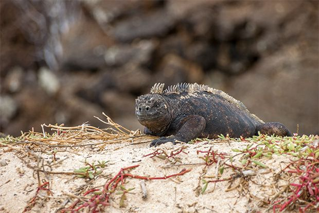 Cruises to the Galapagos Islands for 14 people March 2018