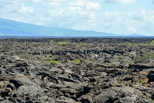 Cruises to the Galapagos Islands for 16 people June 2018