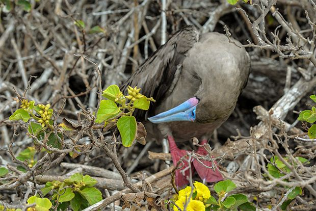 Cruises to the Galapagos Islands for 3 people May 2018