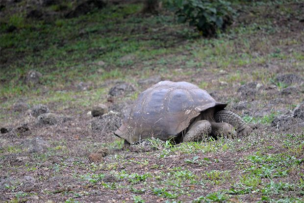 Cruises to the Galapagos Islands for 5 people May 2018