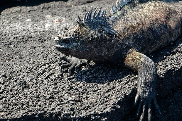 Cruises to the Galapagos Islands for 6 people May 2018