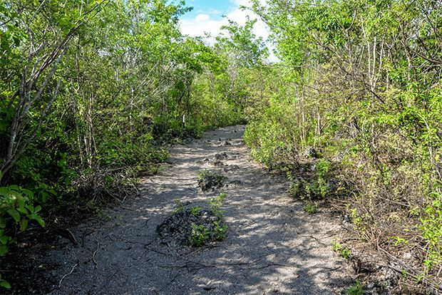 Express Travel to the Galapagos Islands April 2018