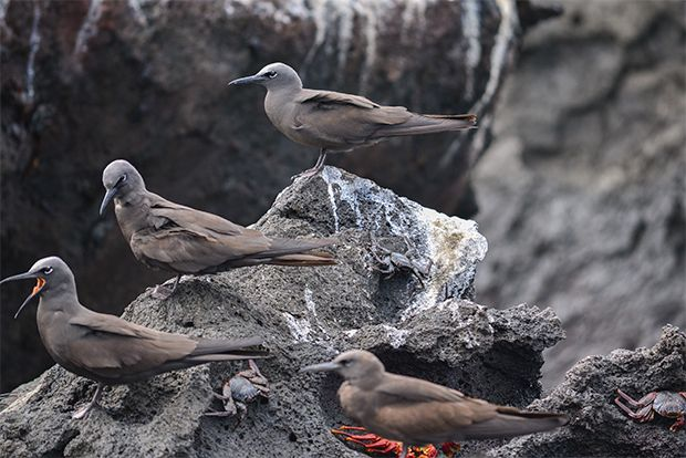 Holidays in Galapagos Islands March 2018