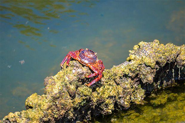 Honeymoon to the Galapagos Islands May 2018