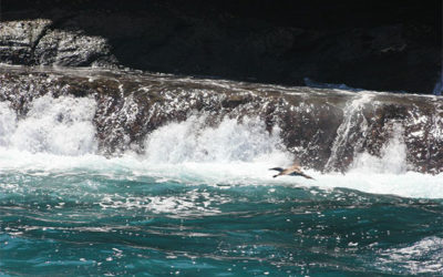 Last minute offers to Galapagos Islands June 2018
