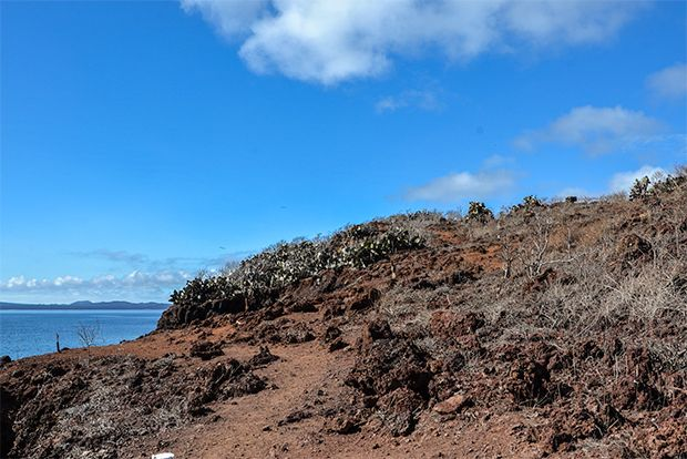 Last minute offers to Galapagos Islands March 2018