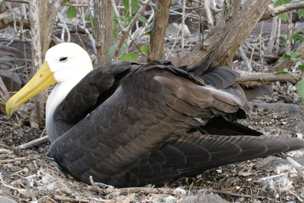 Last minute offers to Galapagos Islands May 2018