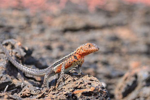 Tourism to the Galapagos Islands April 2018