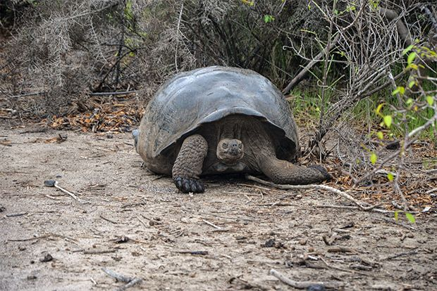 Tourism to the Galapagos Islands June 2018