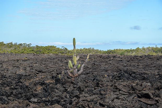 Tours to the Galapagos Islands June 2018