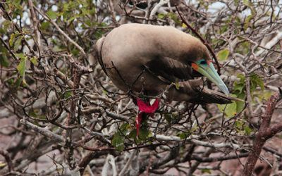 Birthday to the Galapagos Islands October 2018