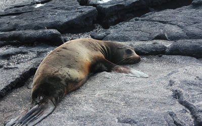 Cruises to the Galapagos Islands October 2018