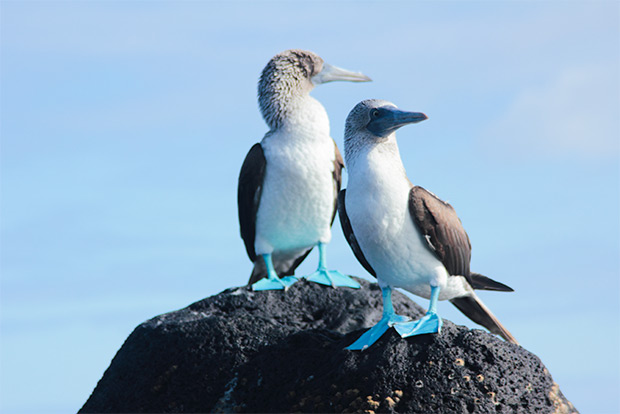 Cruises to the Galapagos Islands for 10 people October 2018