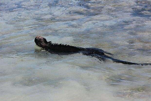 Cruises to the Galapagos Islands for 11 people August 2018