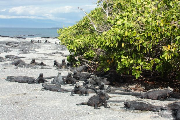 Cruises to the Galapagos Islands for 12 people September 2018