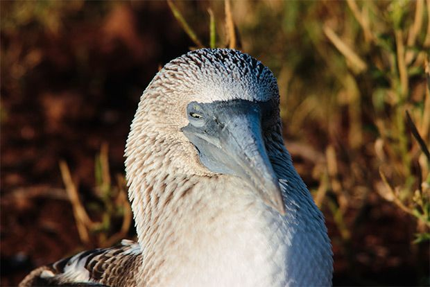 Cruises to the Galapagos Islands for 13 people August 2018