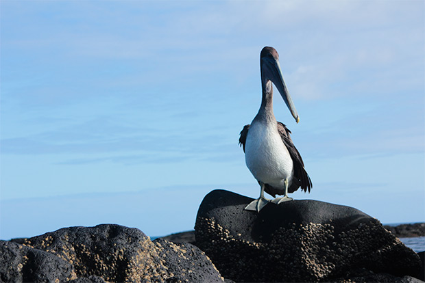Cruises to the Galapagos Islands for 13 people October 2018