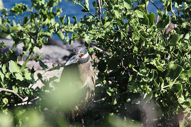Cruises to the Galapagos Islands for 16 people July 2018