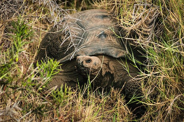 Cruises to the Galapagos Islands for 16 people September 2018