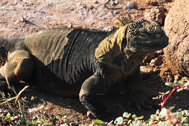 Cruises to the Galapagos Islands for 4 people July 2018
