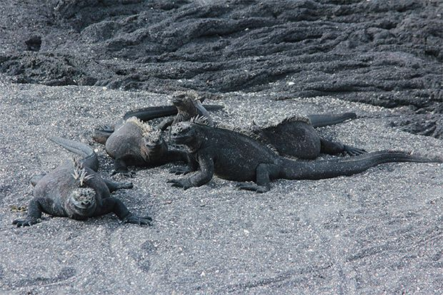 Cruises to the Galapagos Islands for 4 people September 2018