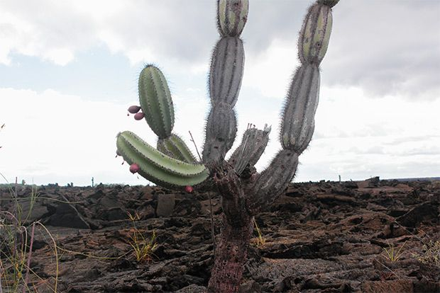 Cruises to the Galapagos Islands for 8 people August 2018