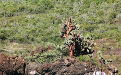 Express Travel to the Galapagos Islands October 2018
