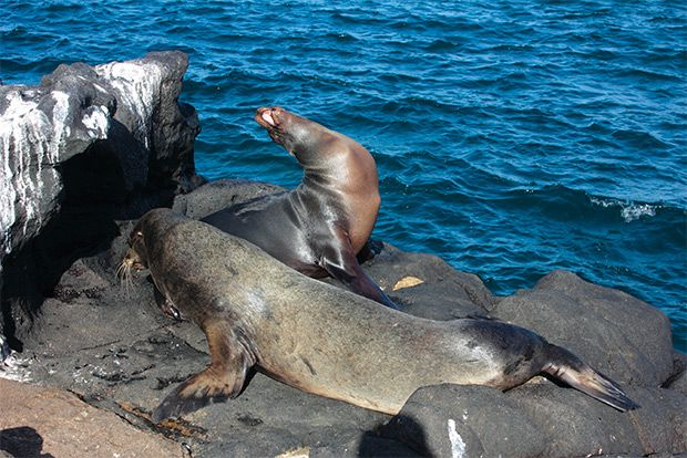 Honeymoon to the Galapagos Islands July 2018
