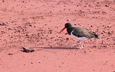 Honeymoon to the Galapagos Islands October 2018