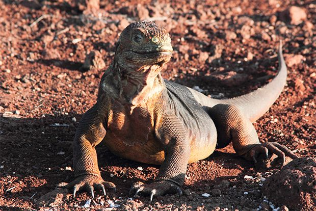 Last minute offers to the Galapagos Islands July 2018