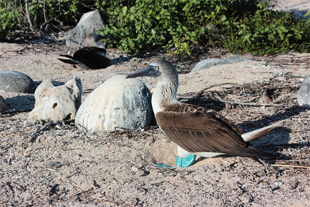Romantic cruises to the Galapagos Islands July 2018