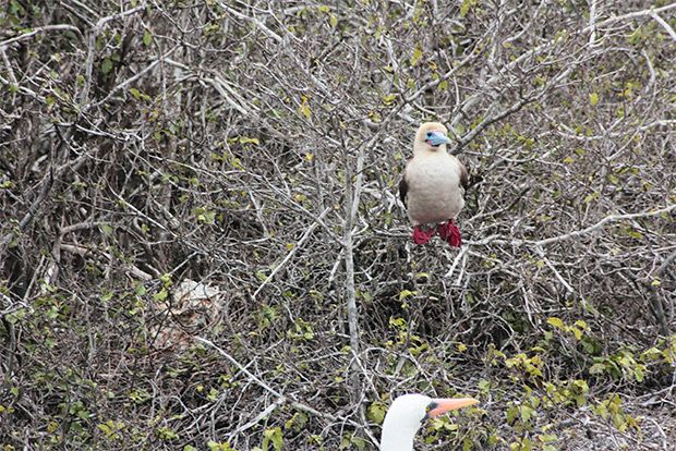 Tourism to the Galapagos Islands October 2018