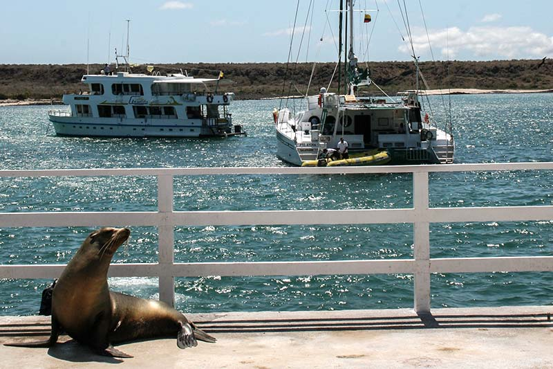 Baltra (South Seymour) Galapagos Island