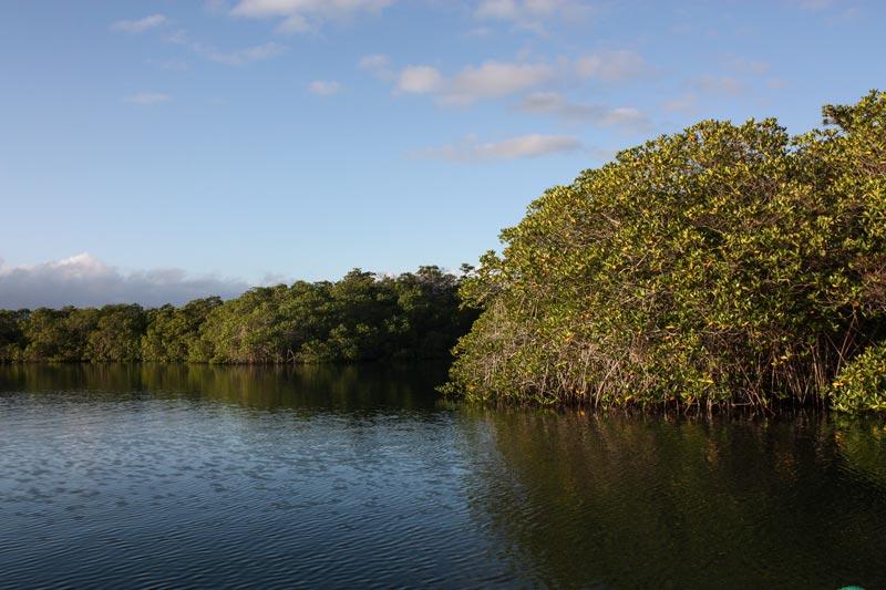 Black Turtle Cove Galapagos Island