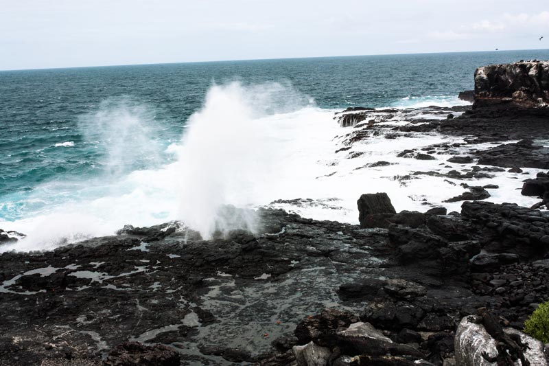 Española: Suarez Point Galapagos Island