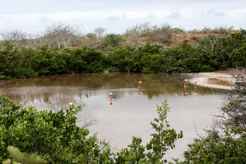 Floreana: Cormorant Point Galapagos Island