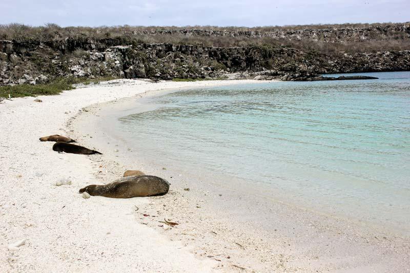 Genovesa: Darwin Bay Galapagos Island