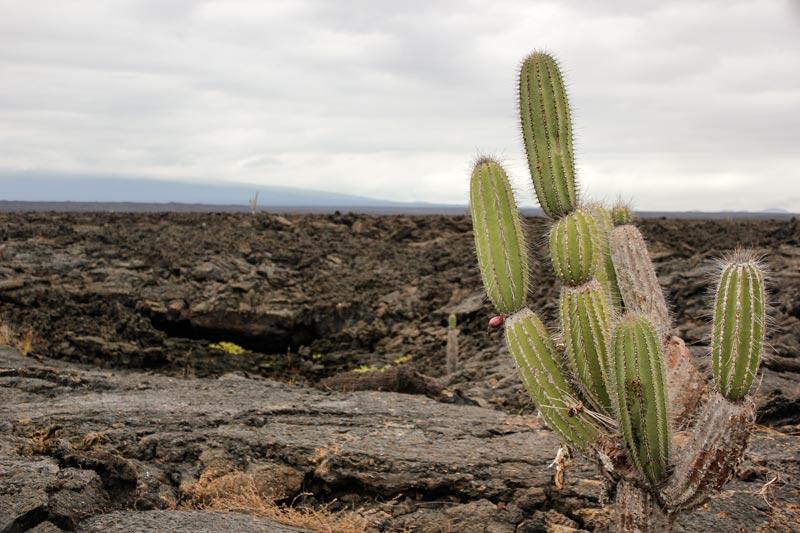 Isabela: Moreno Point Galapagos Island