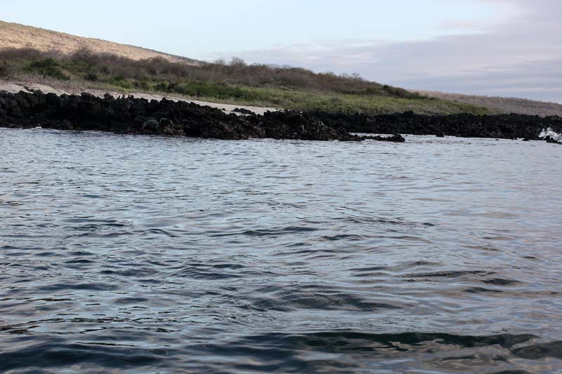 Isabela: Urbina Bay Galapagos Island