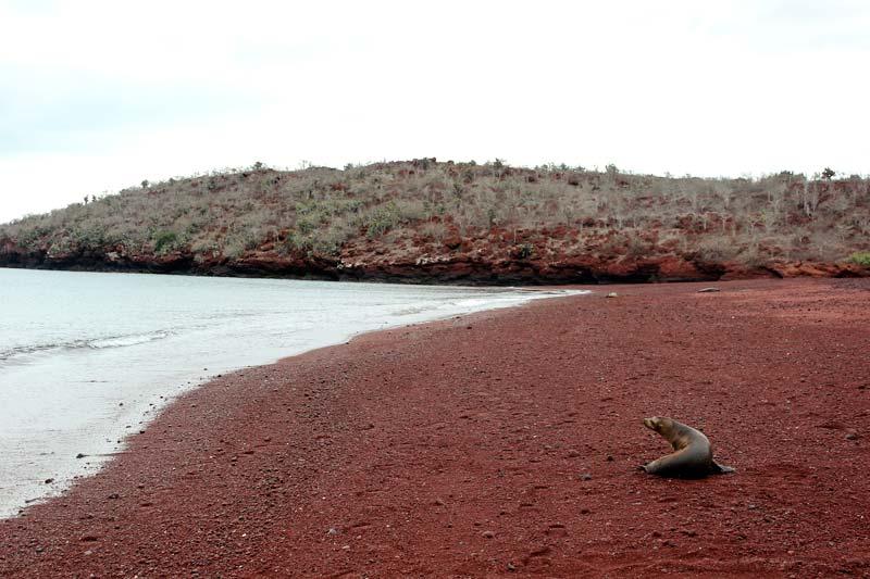 Rabida Island Galapagos Island