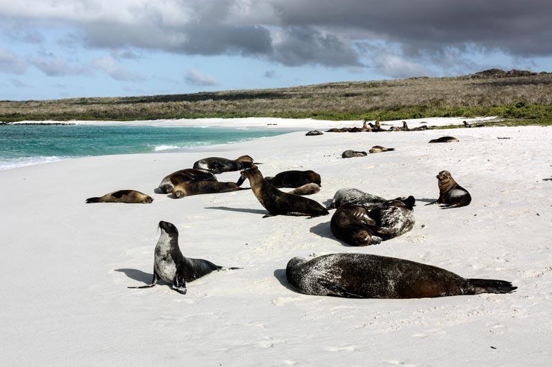 San Cristóbal: Lobos Island Galapagos Island