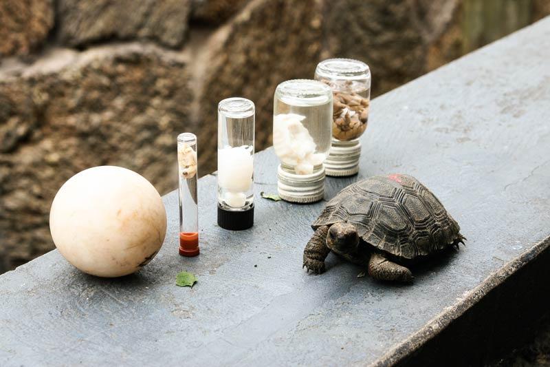 Santa Cruz: Charles Darwin Station Galapagos Island